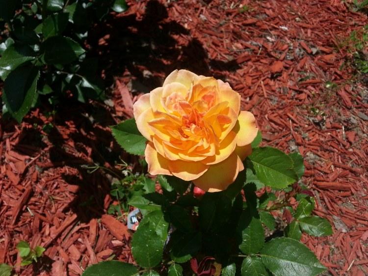 Rose - Rosie the Rivetor