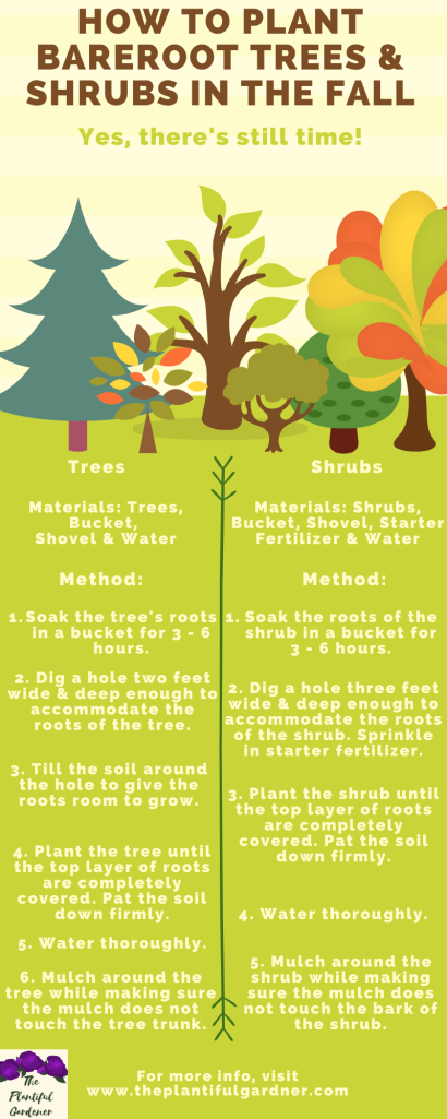 how to plant trees and shrubs in the fall infographic