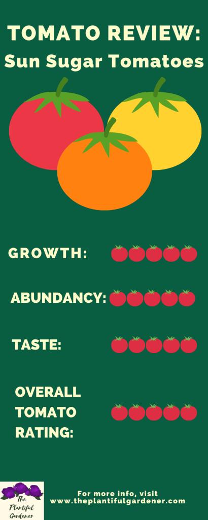 tomato infographic
