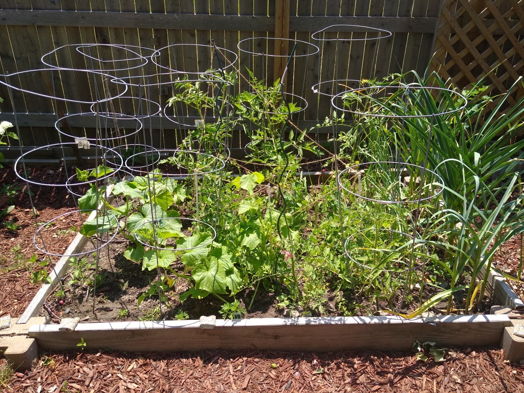 victory garden picture