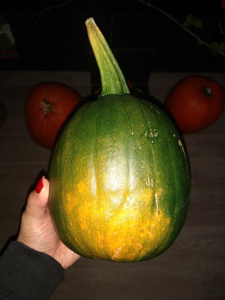 ripening a pumpkin picture